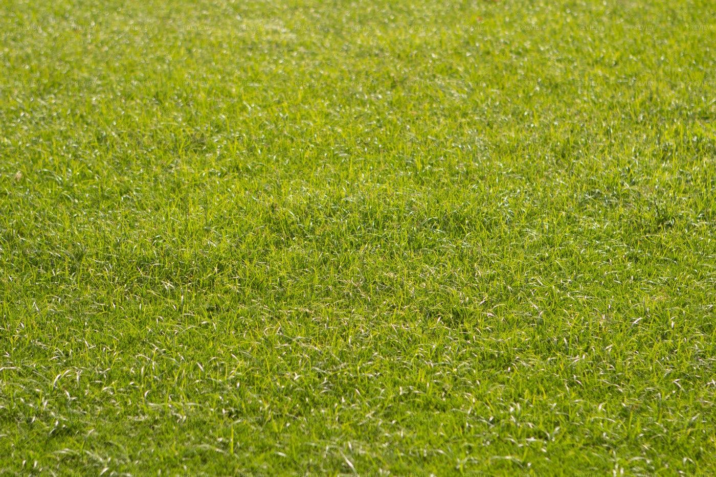 Freshly Cut Green Grass: Stock Photos