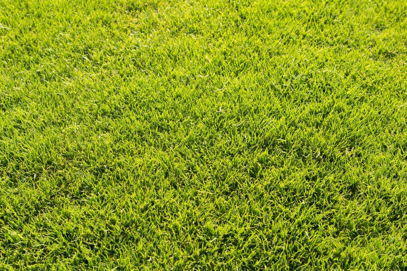 Mowed Lawn: Stock Photos