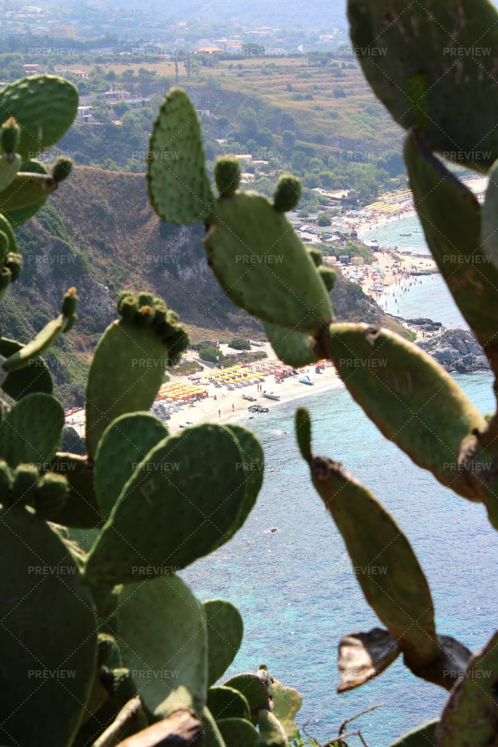 Prickly Pear Cactus Near The Coast: Stock Photos