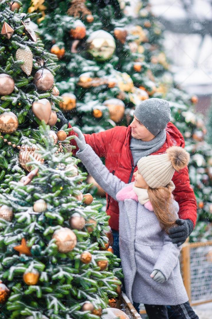 Choosing A Christmas Tree: Stock Photos