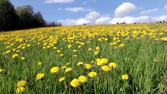 Summer Meadow: Stock Video