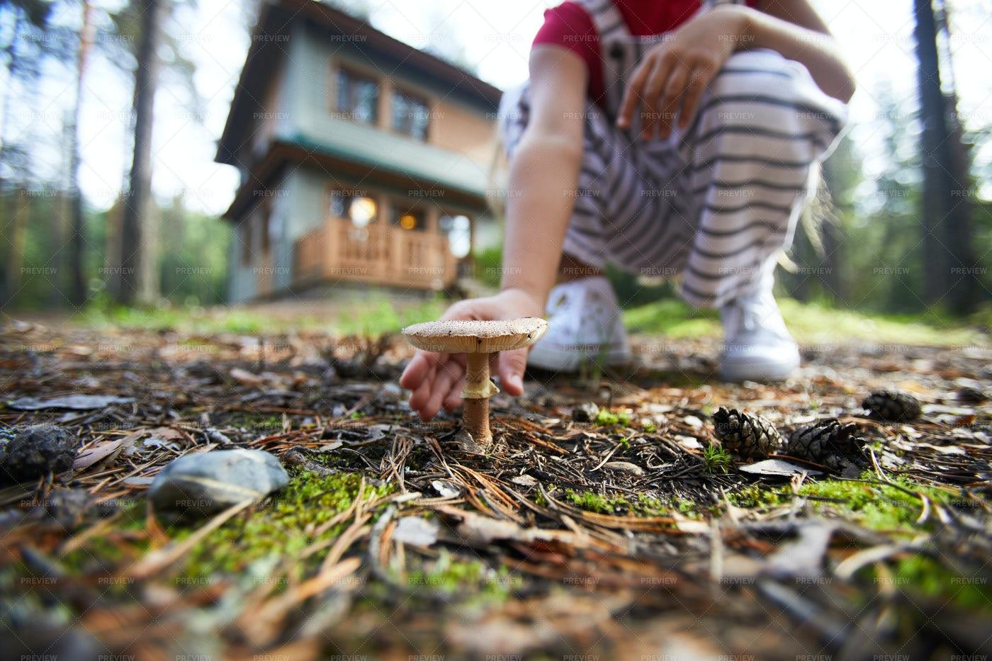Kid Finding Mushroom: Stock Photos