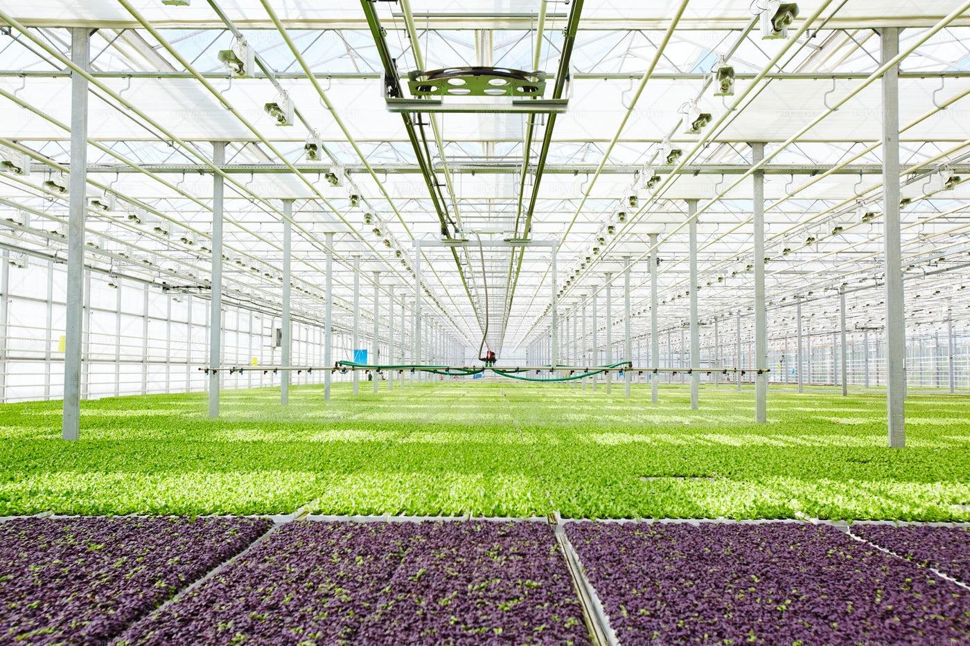 Seedlings In Glasshouse: Stock Photos