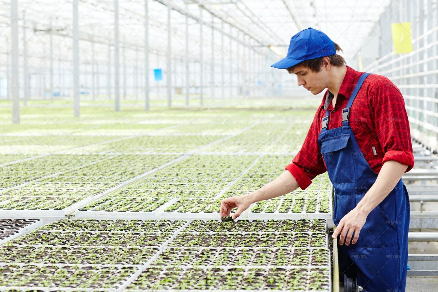 Sorting Seedlings: Stock Photos