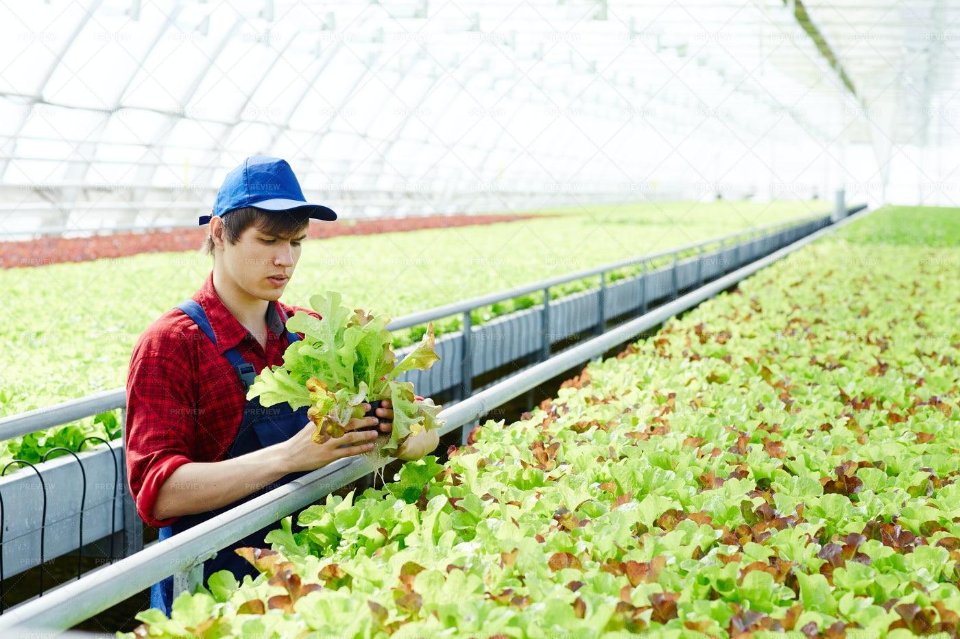 Specialist In Farming: Stock Photos