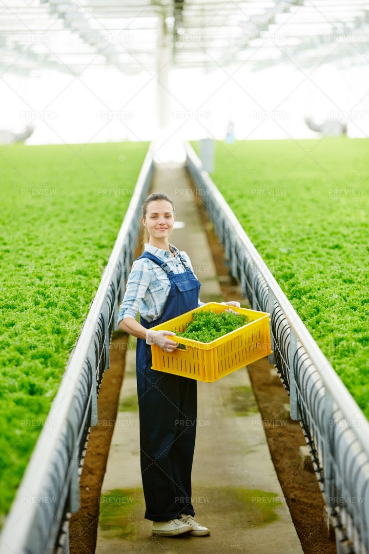 Hothouse Worker: Stock Photos