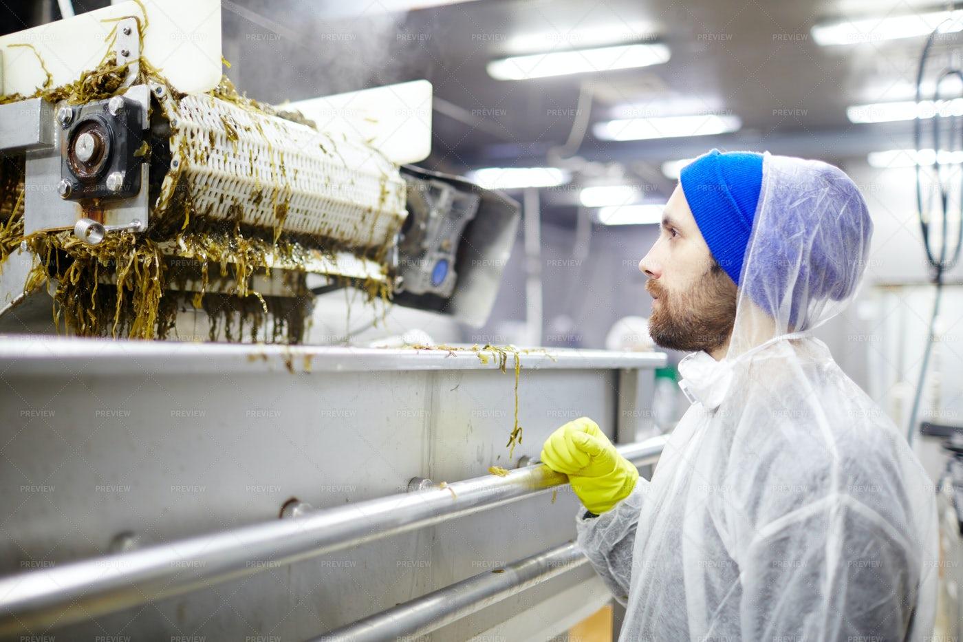 Mixing Seaweed: Stock Photos