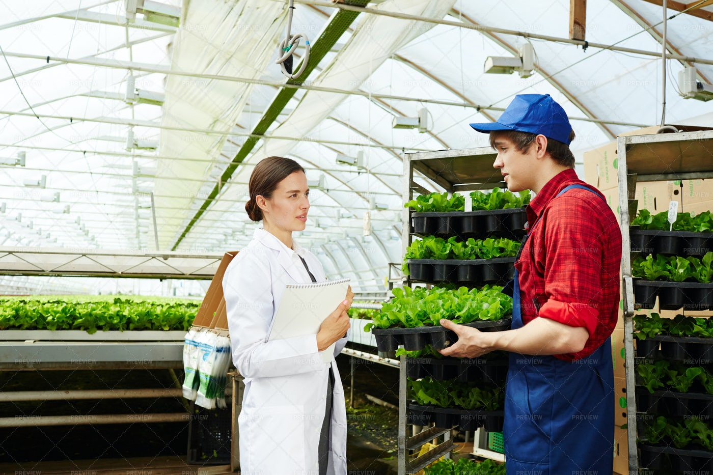 Young People Working In Greenhouse: Stock Photos