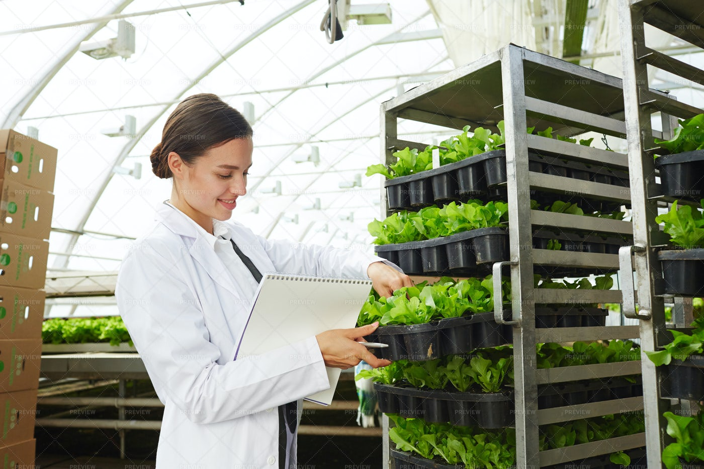 Agricultural Engineer Checking Crop: Stock Photos