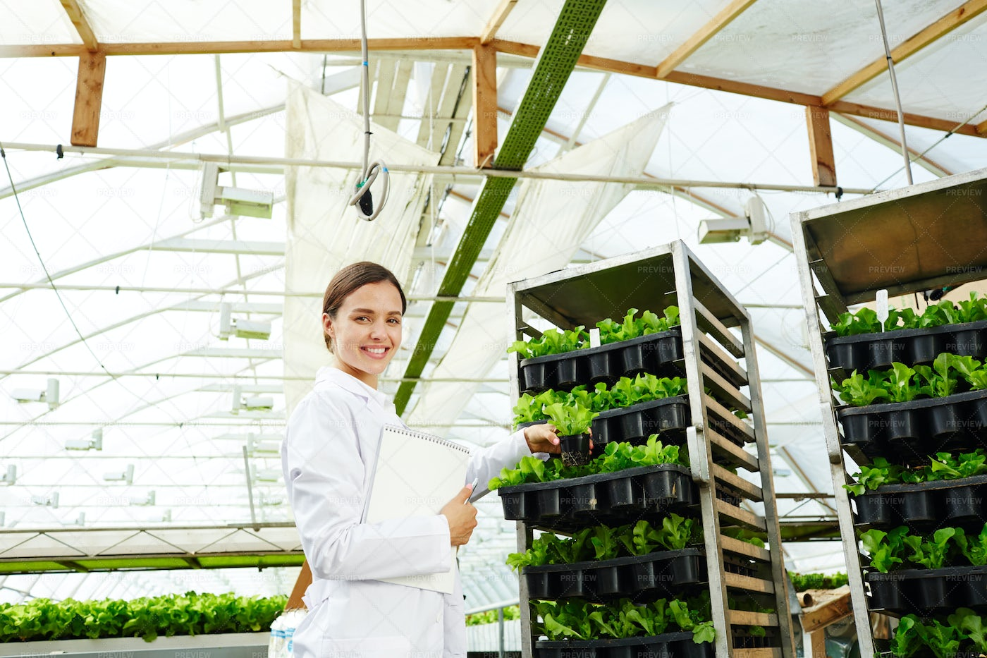 Happy Woman With Greenhouse Lettuce: Stock Photos