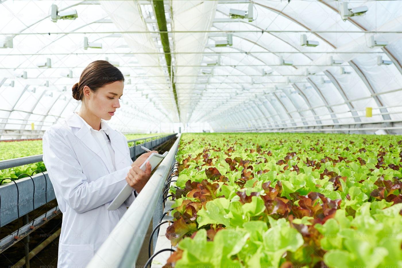 Woman Inspecting Greenhouse: Stock Photos
