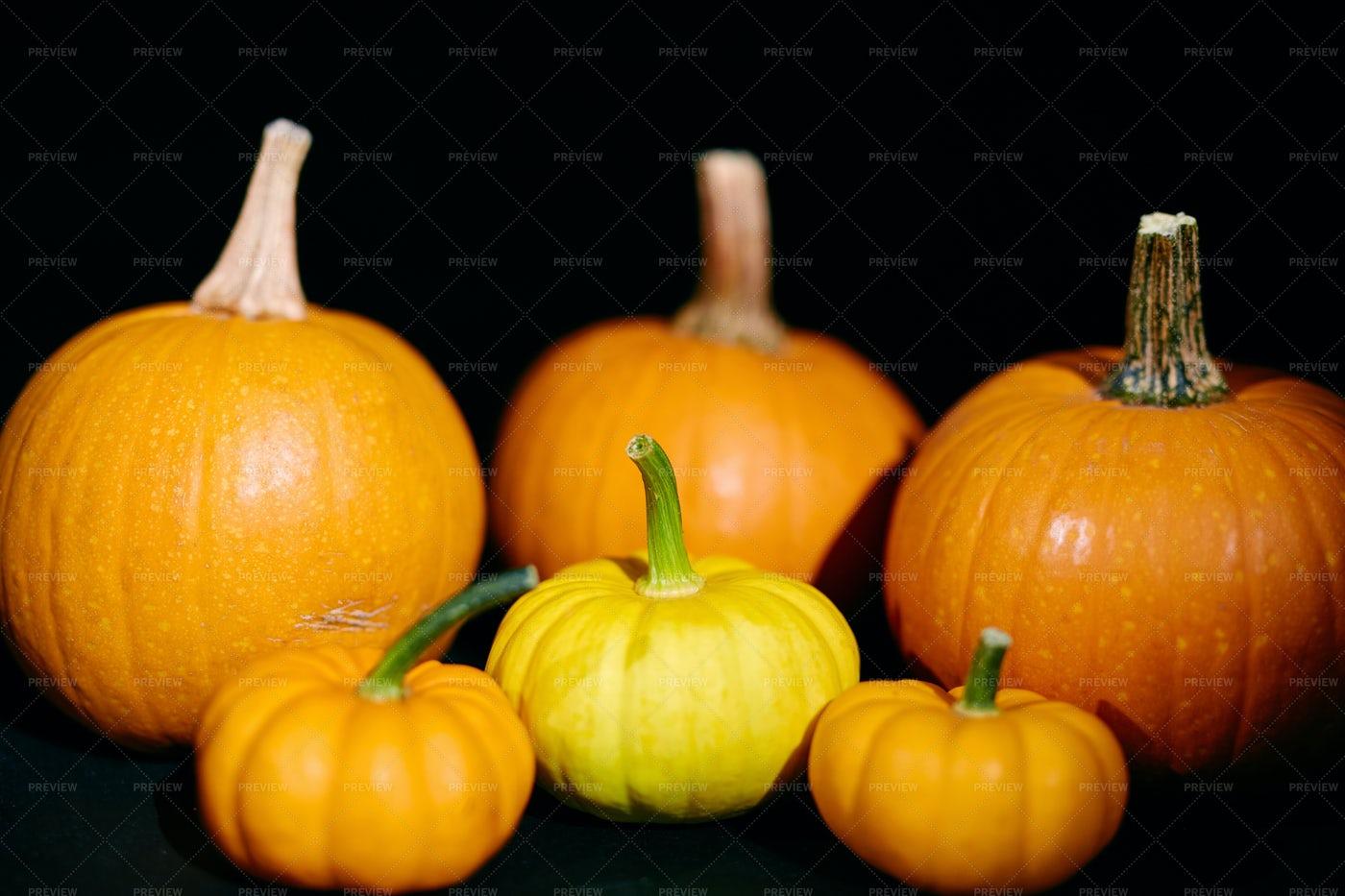Ripe Pumpkins: Stock Photos