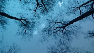 Night Forest: Stock Footage