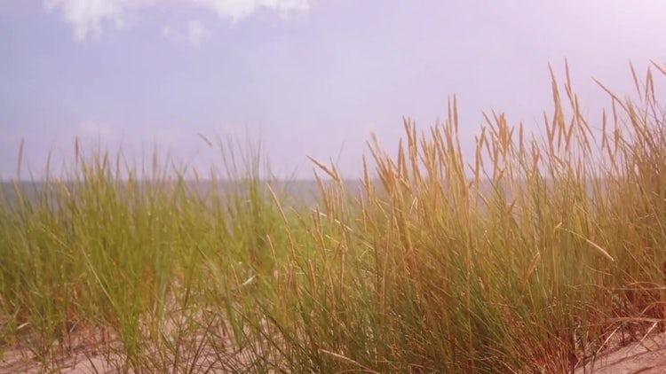 Sandy Beach Dunes: Stock Video