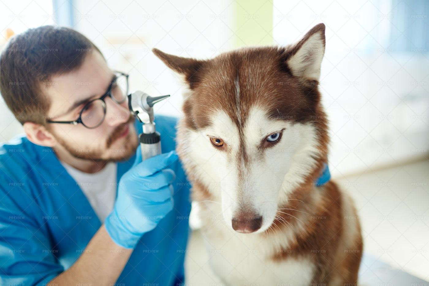 Ear Checkup: Stock Photos