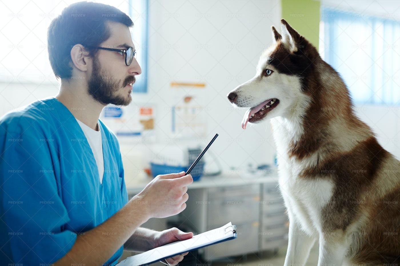 Prescription To Dog: Stock Photos