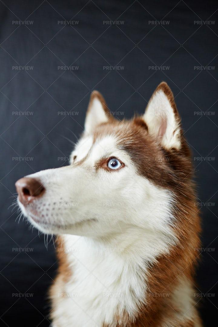 Cute Companion: Stock Photos