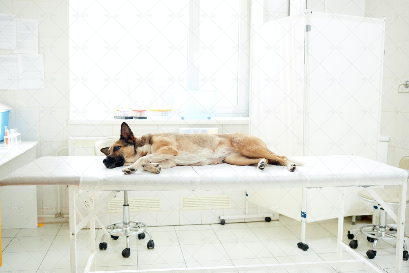 Sick Animal: Stock Photos