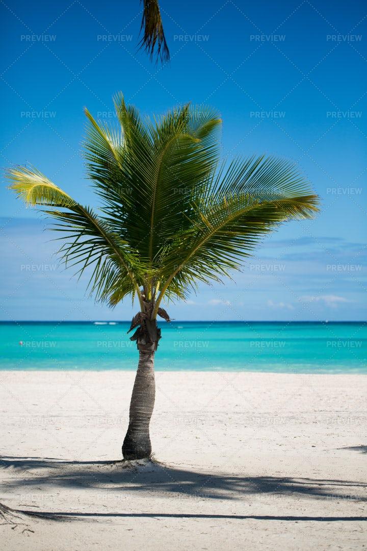 Short Palm Tree: Stock Photos