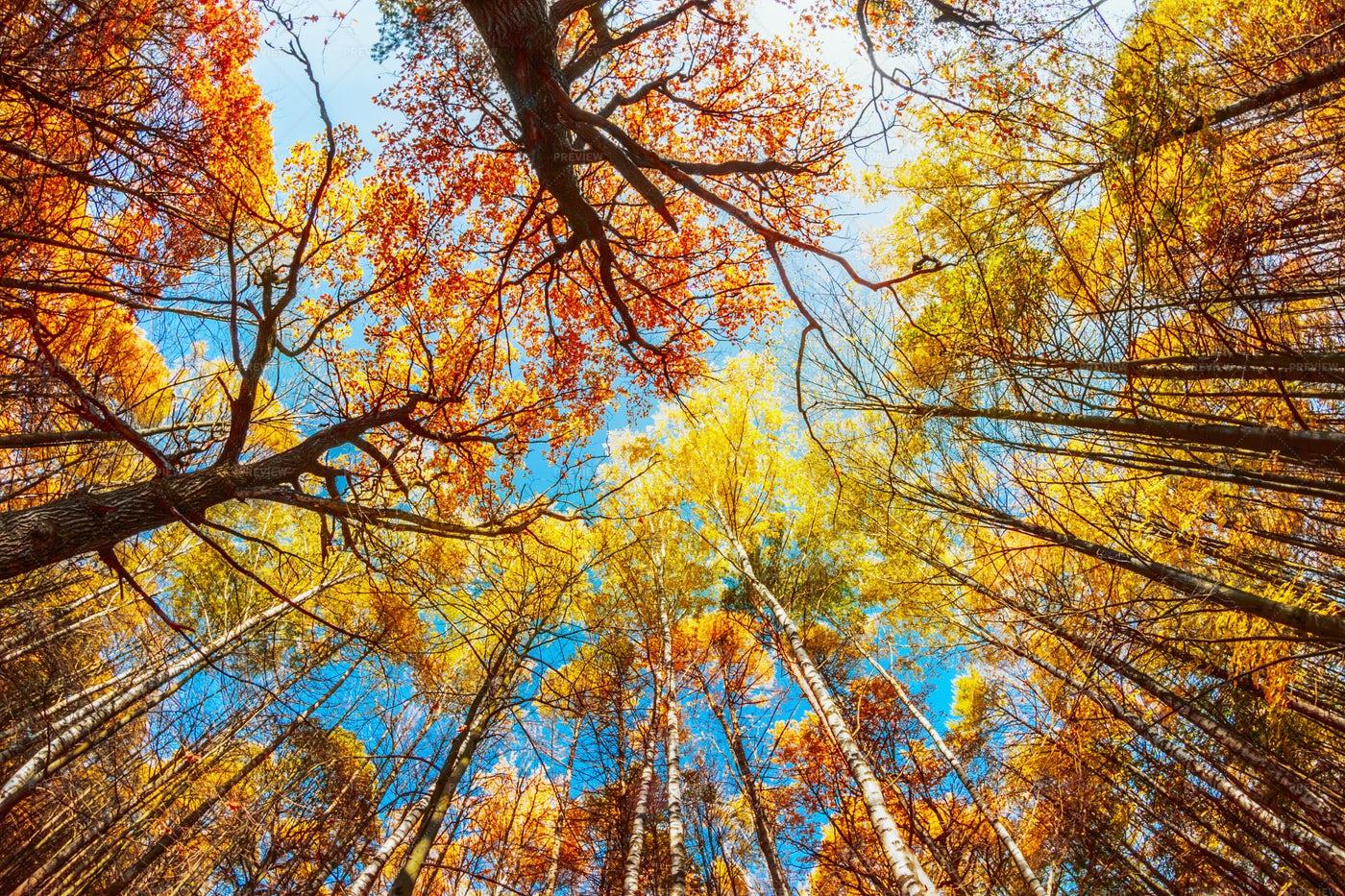 Autumn Treetops: Stock Photos