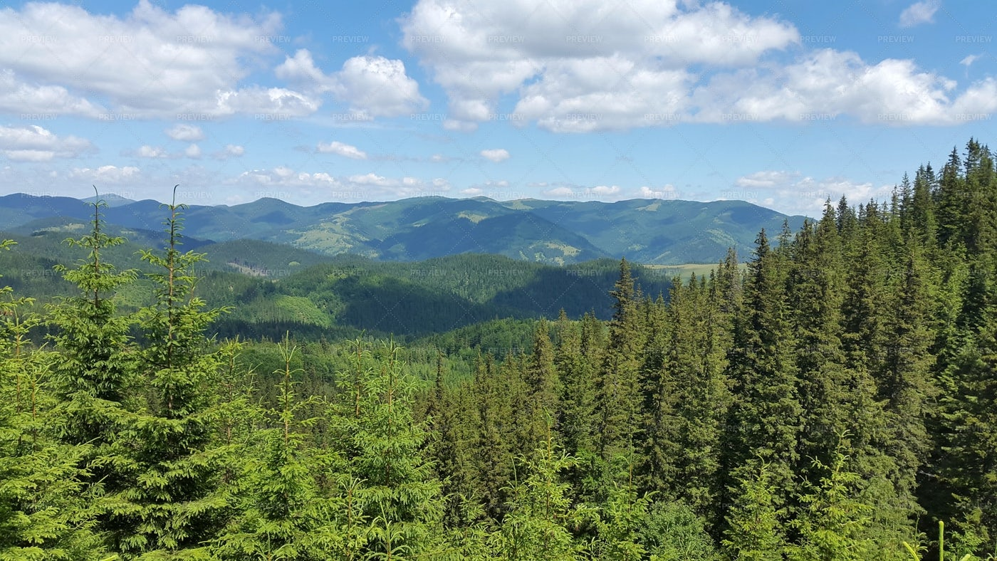 Forested Carpathian Mountains: Stock Photos
