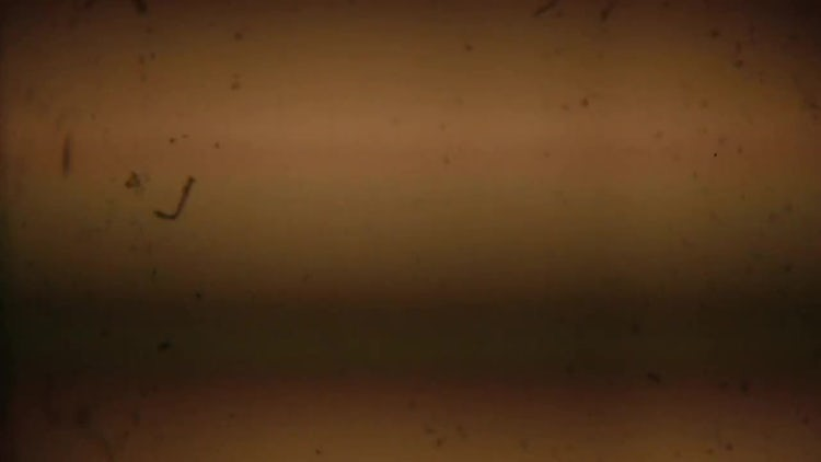 Vintage Film Dust and Scratches: Stock Video