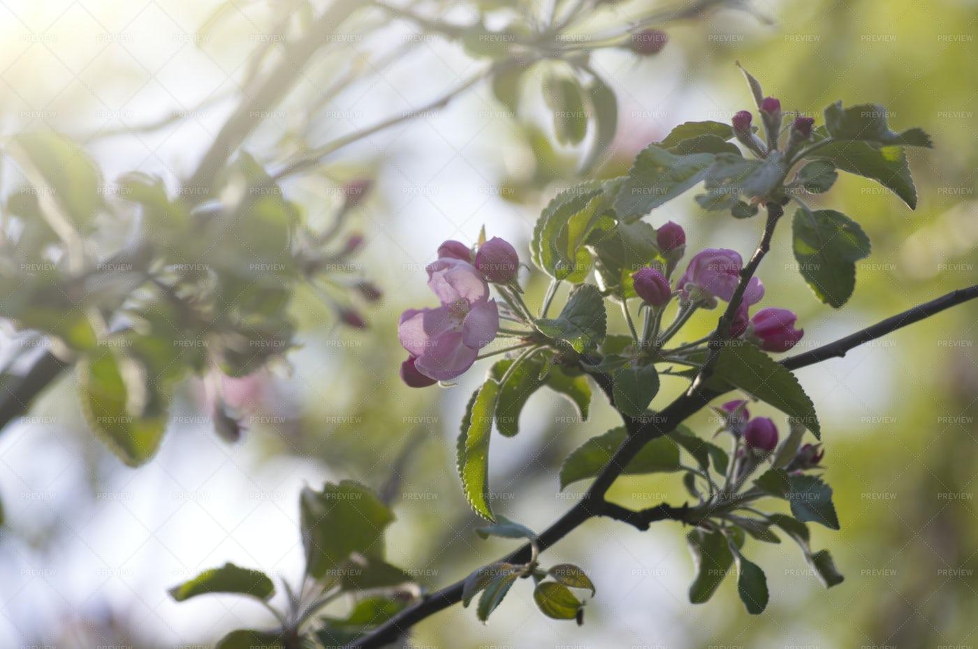 Spring Garden In Blossom: Stock Photos