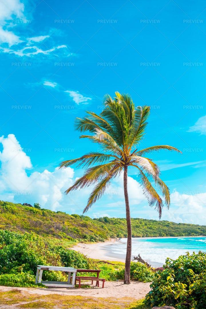 Bench On Tropical Beach: Stock Photos