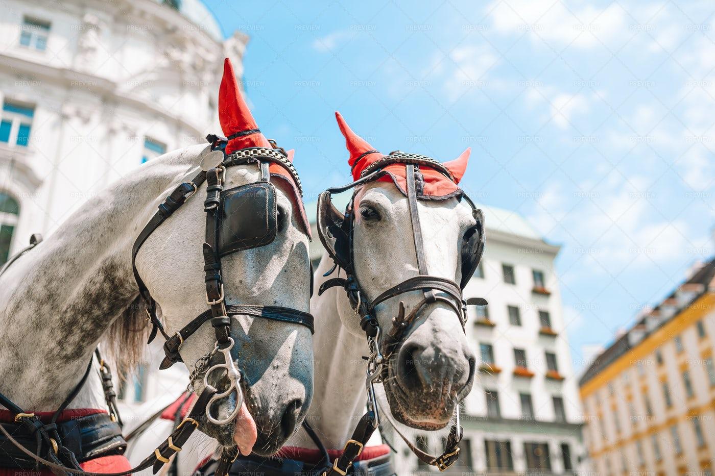 Horses For Fiaker Coach: Stock Photos