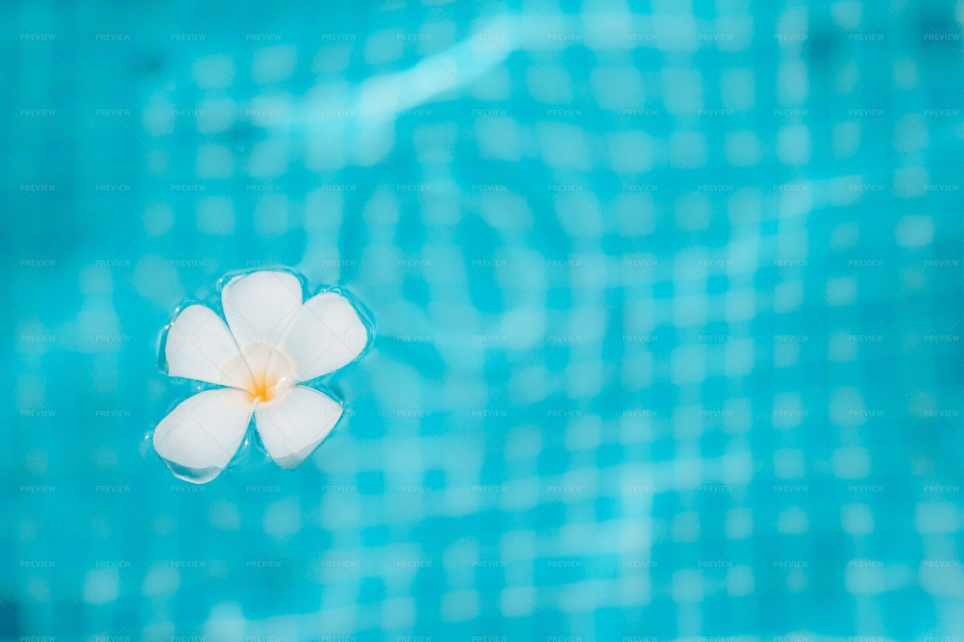 Pool And Tropical Flower: Stock Photos