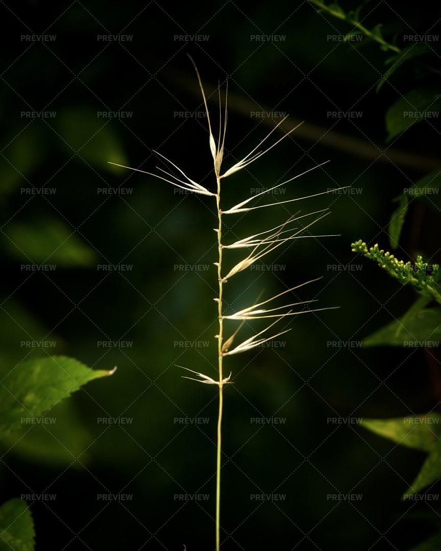 Stalk: Stock Photos