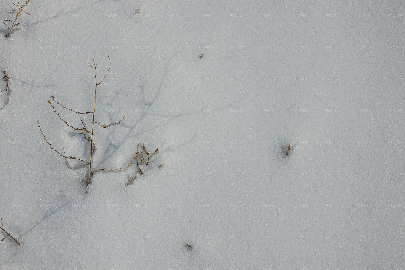 White Snow Texture With Dry Grass: Stock Photos