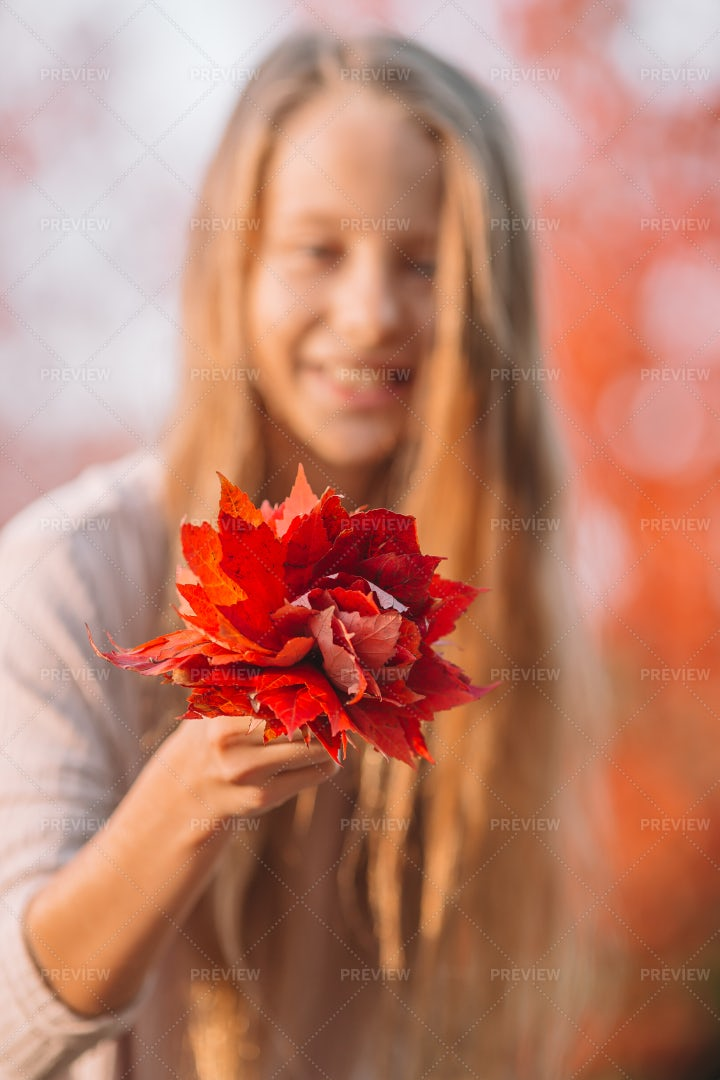 Collecting Red Autumn Leaves: Stock Photos