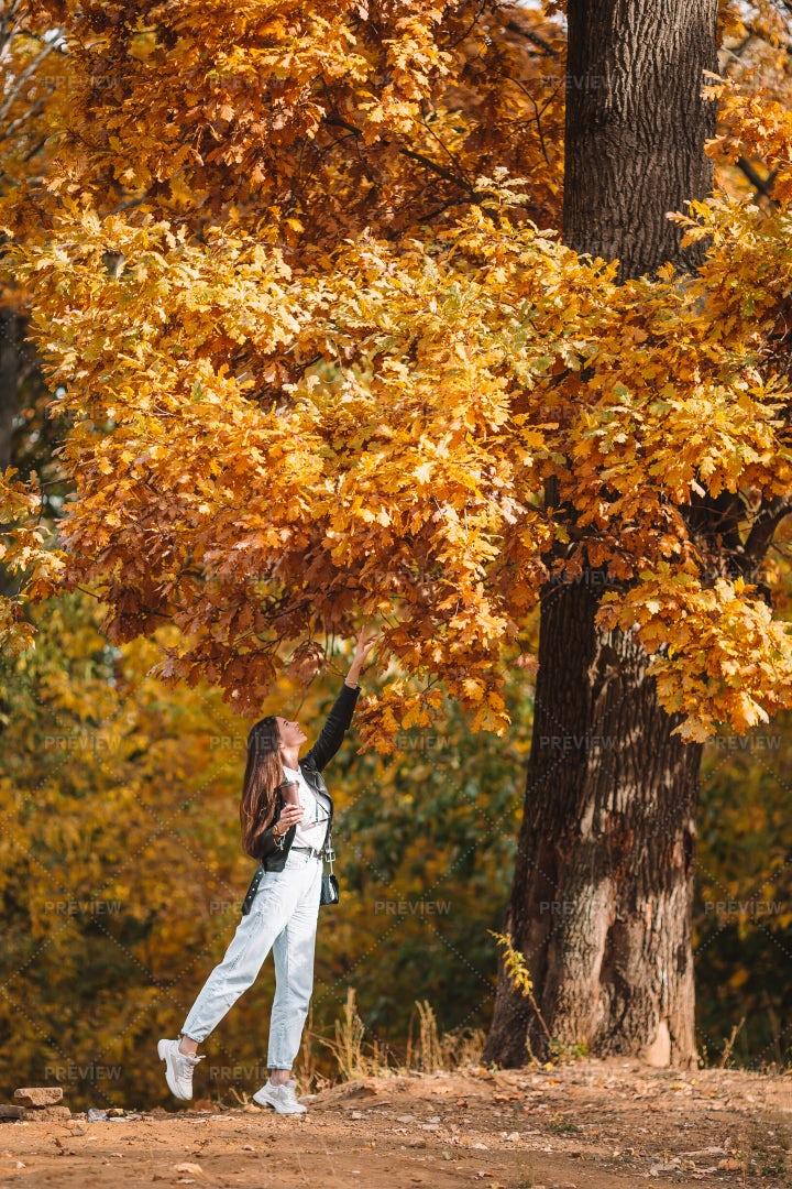 Woman Admires Autumn Leaves: Stock Photos