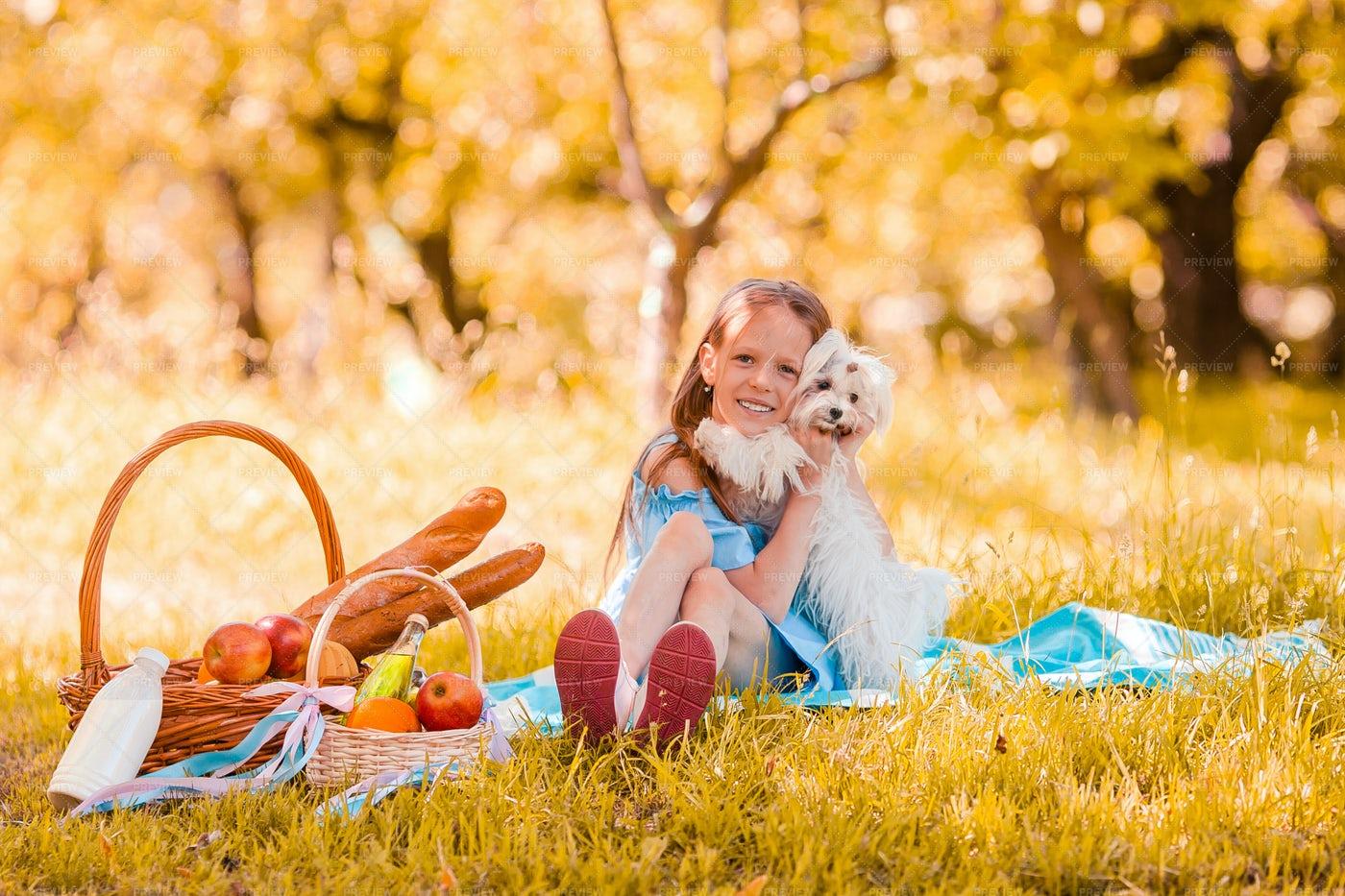 Picnic And A Dog: Stock Photos