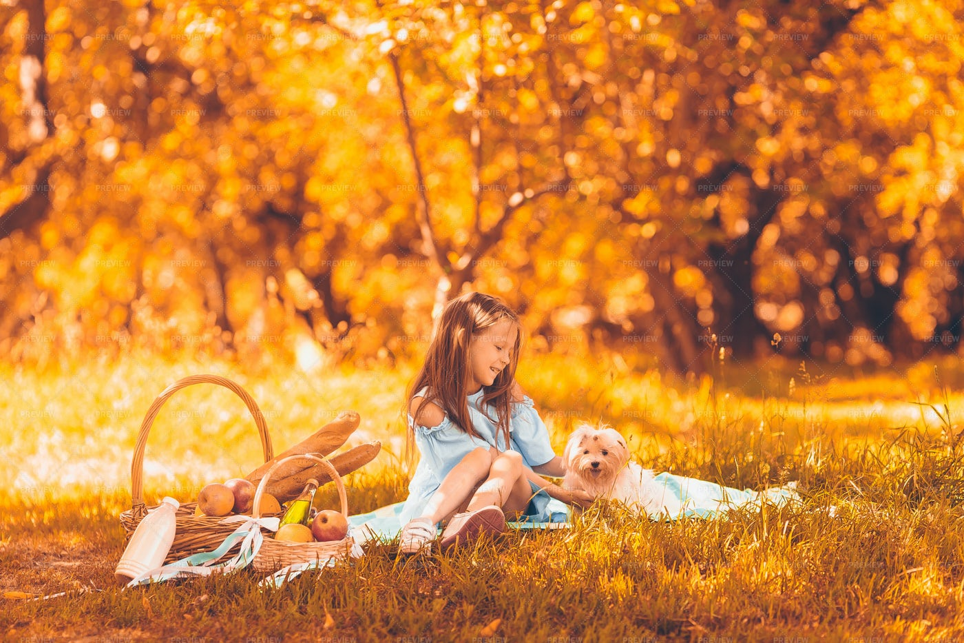 Girl And Dog In The Park: Stock Photos