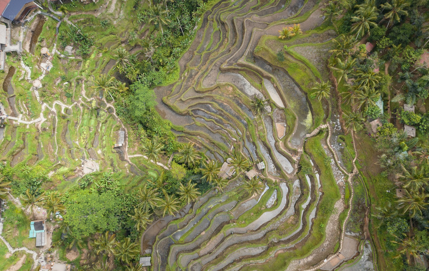 Aerial Of Tegalalang Rice Terrace: Stock Photos