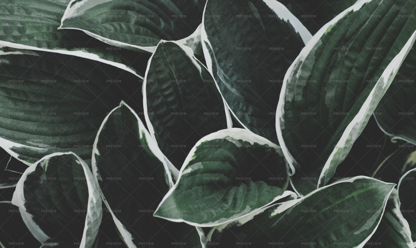 Background Of Fresh Green Leaves: Stock Photos