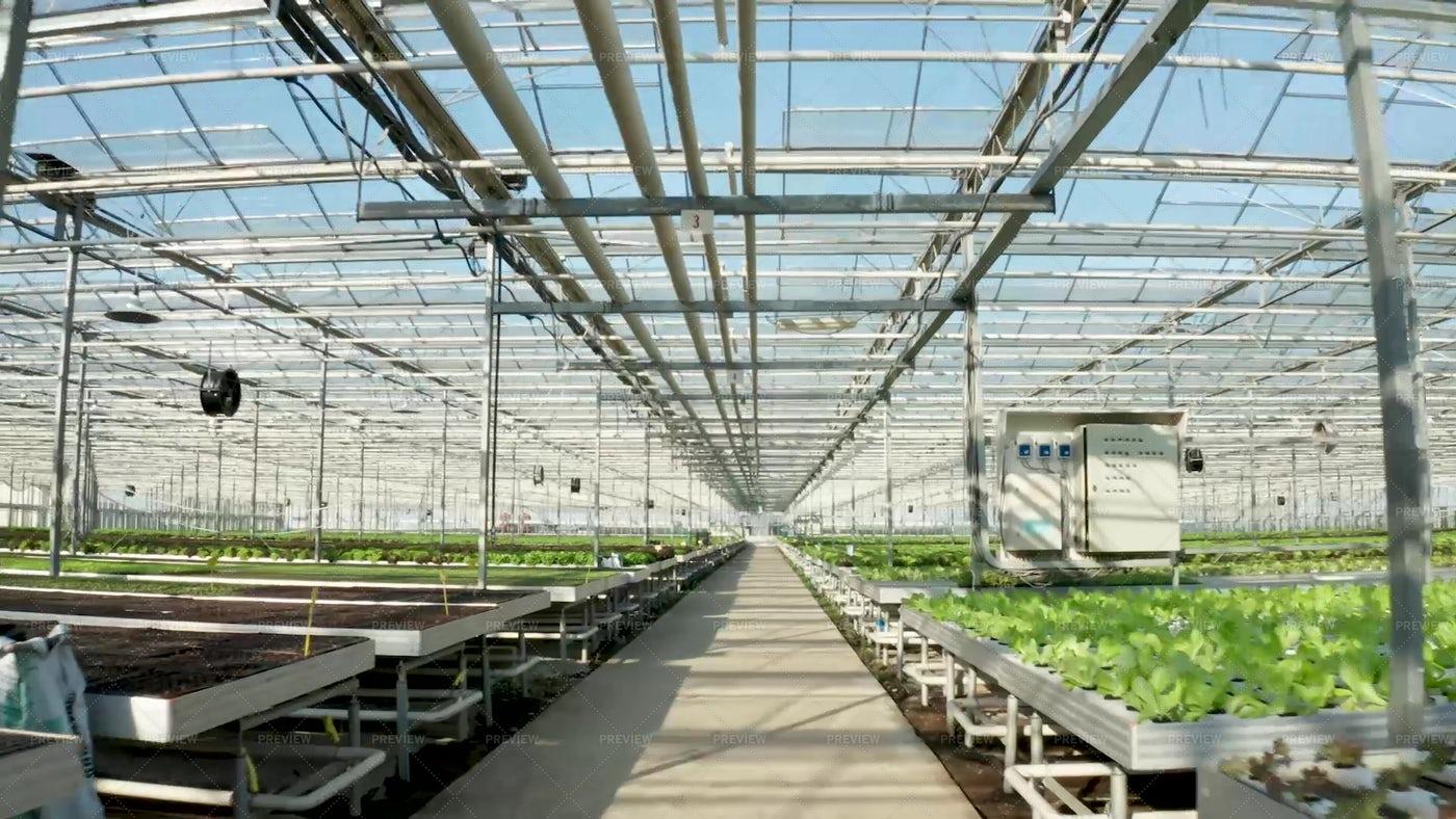 Modern Greenhouse: Stock Photos