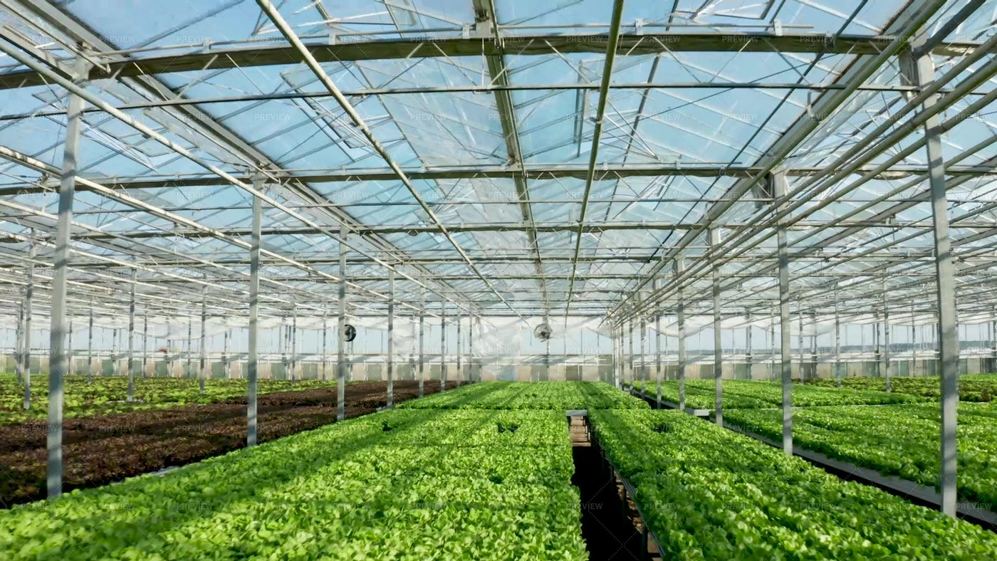 Modern Agriculture Greenhouse: Stock Photos