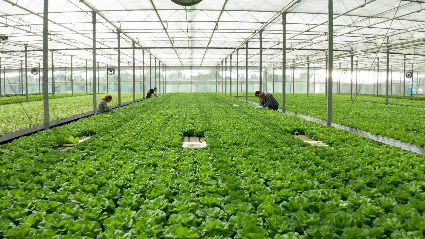 Greenhouse And Farmers: Stock Photos