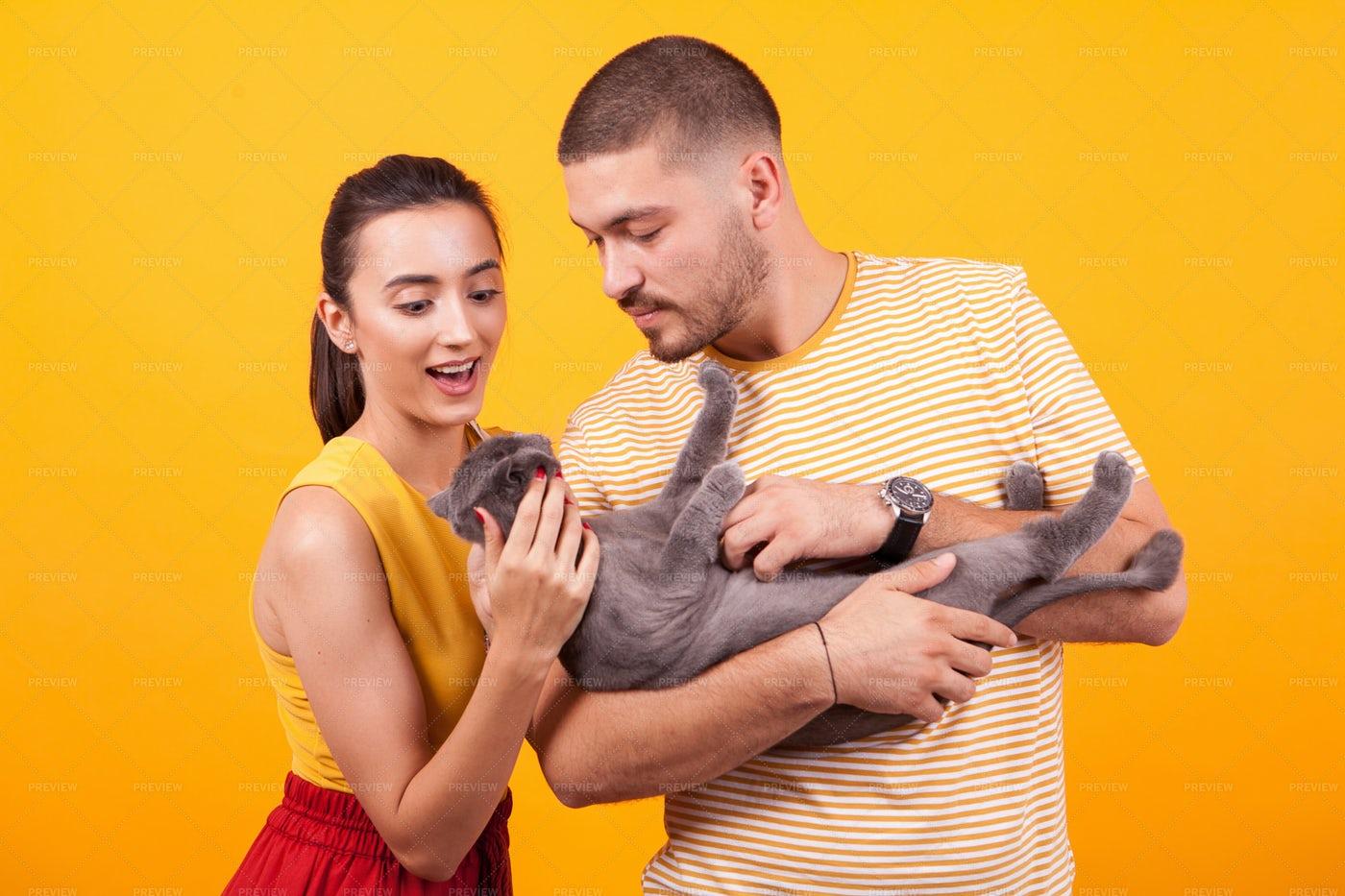 Couple Admiring Cat: Stock Photos