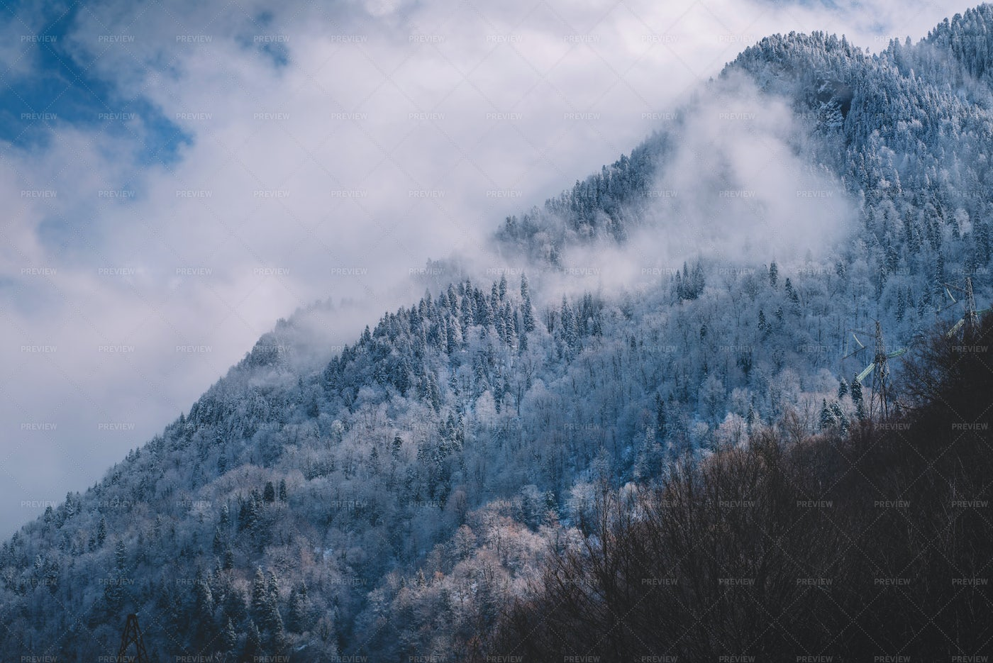 Mountain Forest In The Winter: Stock Photos