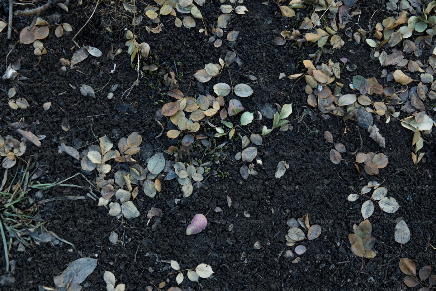 Soil Texture With Leaves: Stock Photos