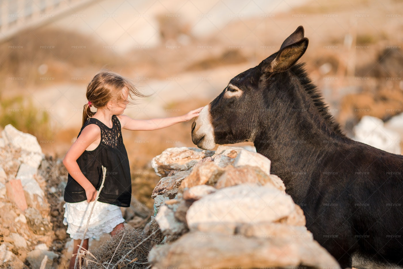 Petting A Donkey: Stock Photos