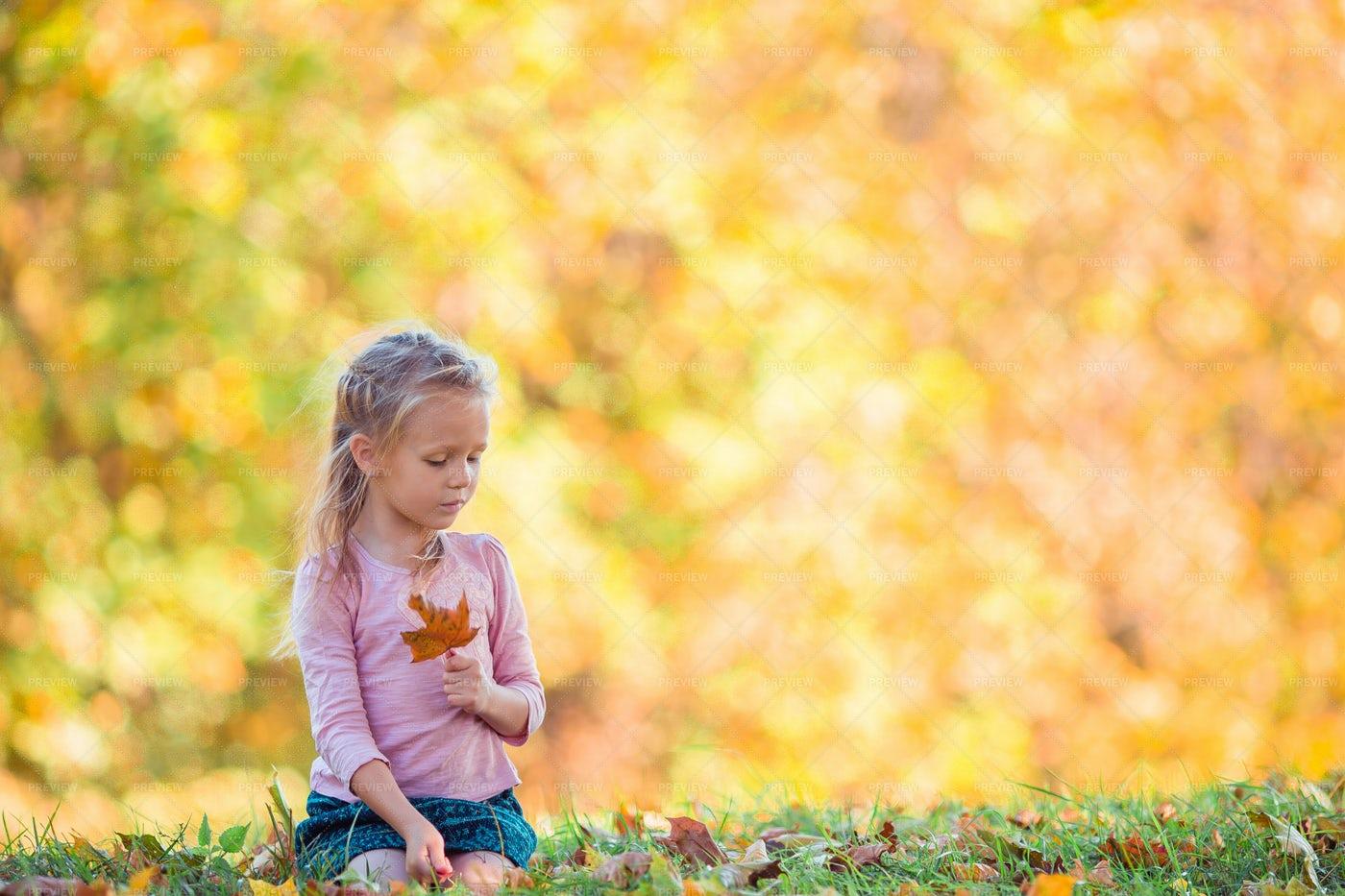 On The Autumn Grass: Stock Photos