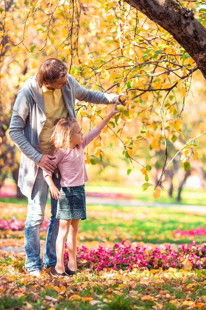 Picking Apples With Dad: Stock Photos