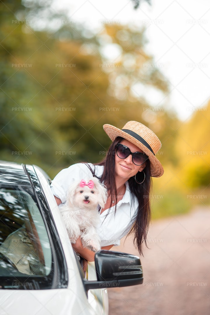 Dog On The Road Trip: Stock Photos