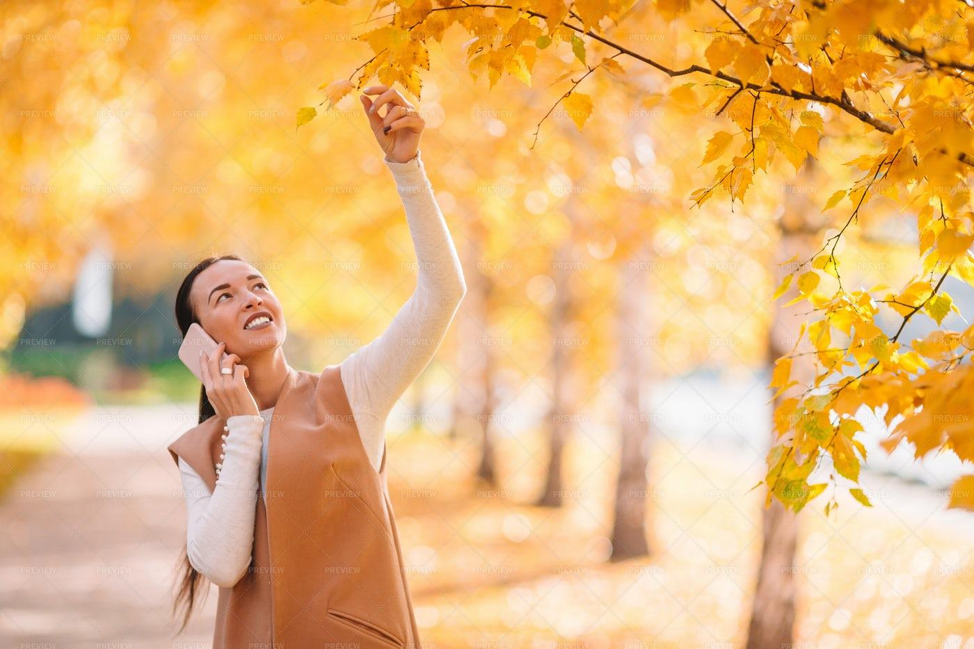Checking Autumn Leaves: Stock Photos