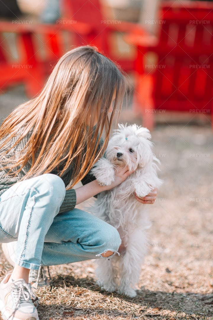 Girl With White Maltese Puppy: Stock Photos